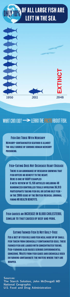 fish-are-not-health-food
